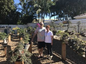 1st stop Caloundra and Bev Caldwell's trees. We started Bonsai together back in 1984