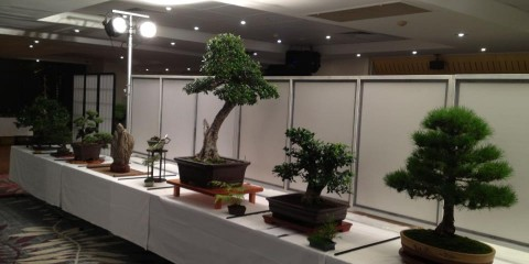 Illawarra Bonsai Society Inc.