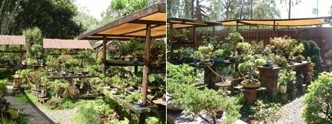 Bonsai Place