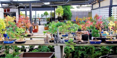 Orient Bonsai Nursery