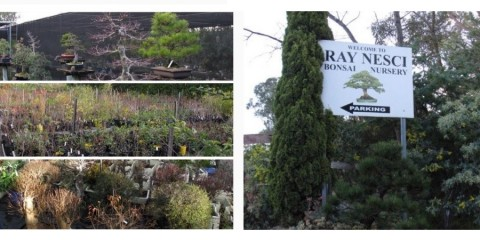 Ray Nesci Bonsai Nursery