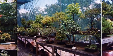 Tasmanian Bonsai Centre
