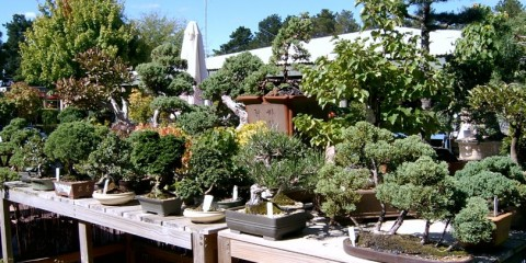 Ledanta Bonsai Nursery