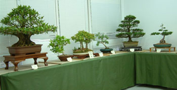 Bonsai Society of the Central Coast Inc
