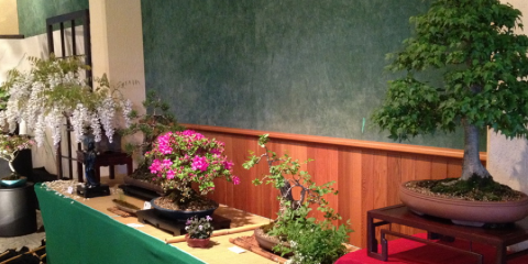 Bonsai Society of Australia Inc
