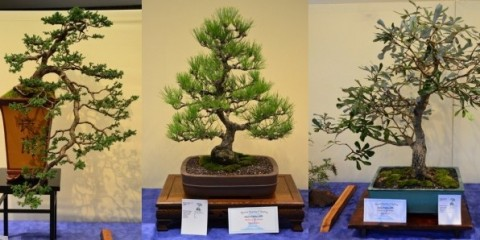 Bonsai Society of Sydney Inc