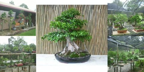 Bonsai World