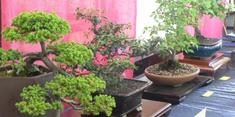 Wauchope Bonsai Workshop Group Inc