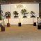 Bonsai Society of Southern Tasmania