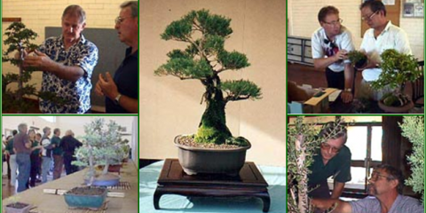 Bonsai Workshop Inc