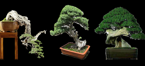 Gold Coast Tweed Bonsai Club Inc