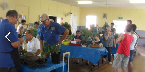 Sunshine Coast Bonsai Society Inc