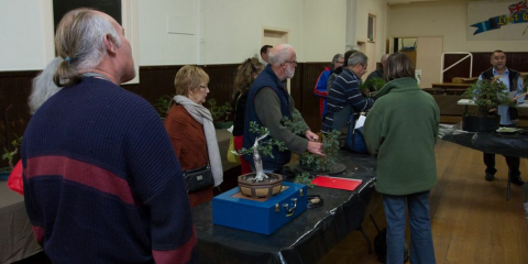 Geelong Bonsai Club Inc
