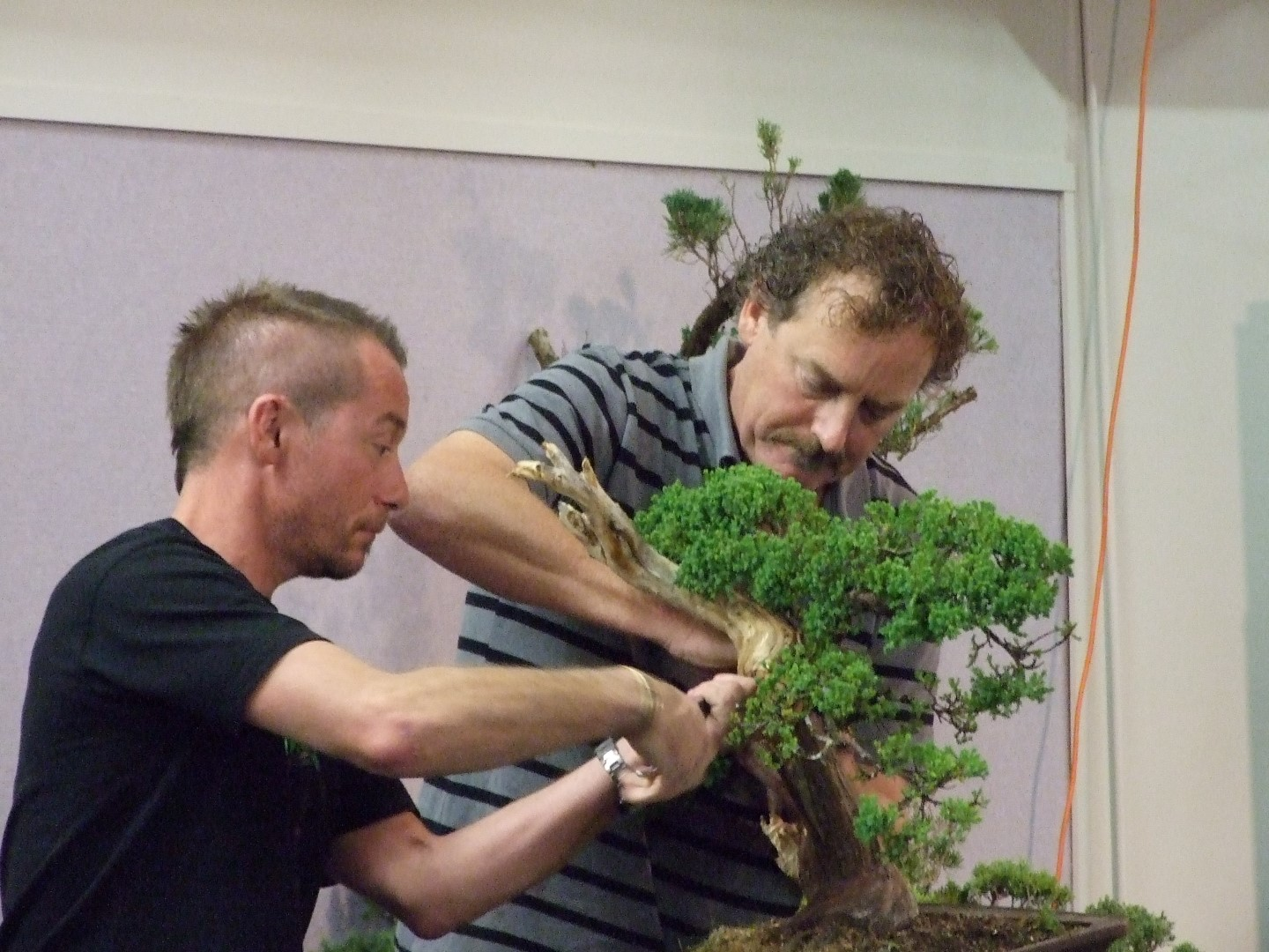 Tony Bebb Demo 10 A Bonsai Journey Wiring