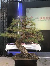 2 hours less introductions for this large pine. Oh what a feeling