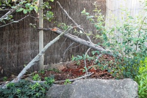 The area outside the bonsai house. The first sign of trouble!