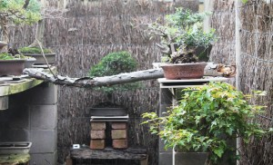 My second view of the bonsai house.