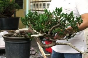 Tree 1 - before