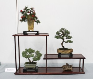 Shohin display of Grevillea, Tea Tree and Dwarf Grey Honey Myrtle